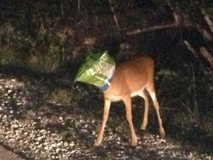 deer-litter