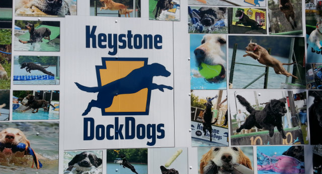 dock dog pics