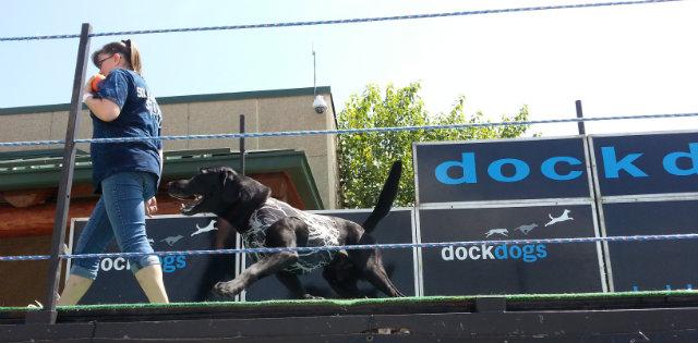 dock dog prep