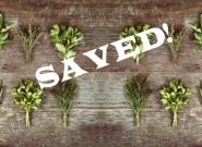 preserving herbs