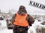 Stalking Antelope